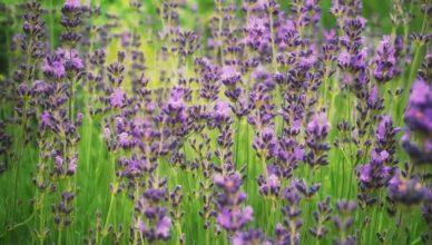piante terapeutiche
